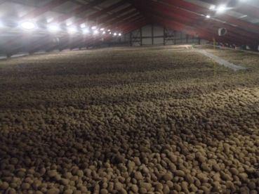 Aardappel Opslag