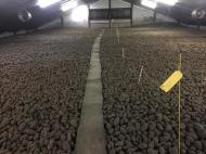 Aardappelen in de schuur